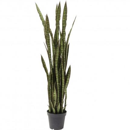 Deco Plant Sansewieria 155cm Kare Design